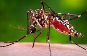 Government enforces measures to prevent Dengue