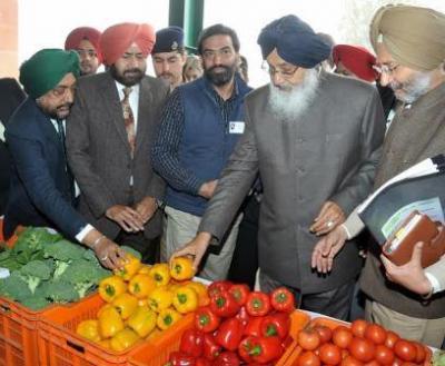 vegetable market at Mohali-